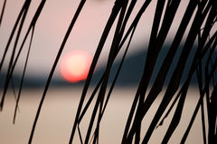 Sunset. Picture of a setting sun partially hidden by a palm tree branch Stock Photo