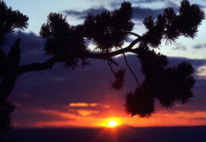 SUNSET. In Grand Canyon, Arizona framed with a Pine Tree Branch Stock Images