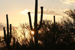 Sunset. With cactus Stock Images