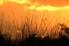 Sunset. Grass in sunset background stock photography