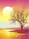 Sunset. Orange landscape with sun, river, tree and reflection Royalty Free Stock Image