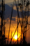 Sunset. In reed in Danube Delta stock images