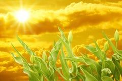 Free Sunset Stock Image - 9634701