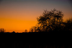 Sunset in an abandoned garden. The awakening of spring. the sunset. spring Apple orchard Stock Photography