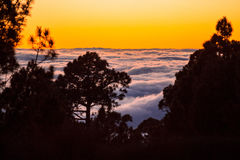 Sunset above the clouds with silhouette of pine trees Stock Photos