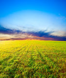 Sunset above the field Royalty Free Stock Images