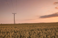 Sunset above field. Sunset above the corn field royalty free stock photos