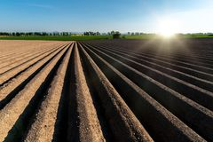 Sunset above the field with rows. Beautiful sunset above the brown field with rows Royalty Free Stock Photography