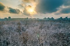 Sunset above frozen trees in a forest covered by snow near the city of  Voronezh Royalty Free Stock Images