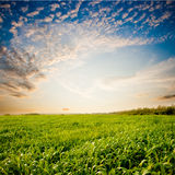 Sunset above the green field Royalty Free Stock Photos