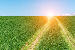 Sunset above green wheat field Royalty Free Stock Photography