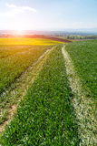 Sunset above green wheat field Royalty Free Stock Photos