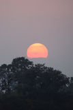 Sunset above Indian jungle Royalty Free Stock Image