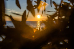 Sunset above King's Beach.Montenegro. Sunset above King's Beach in Montenegro remove through foliage Stock Images