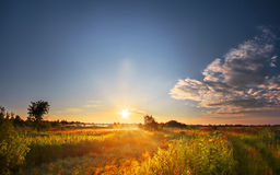 Sunset above meadow Royalty Free Stock Image