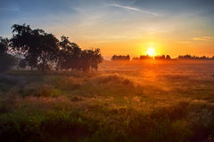 Sunset above meadow. Sunset summer landscape, beautiful sky above meadow Royalty Free Stock Photography