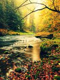 Sunset above mountain river covered by orange beech leaves. Bended branches above water Royalty Free Stock Image