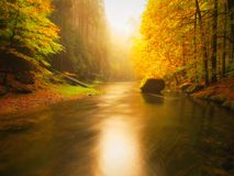 Sunset above mountain river covered by orange beech leaves. Bended branches above water Stock Photo