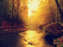 Sunset above mountain river covered by orange beech leaves. Bended branches above water Stock Photography