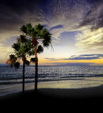 Sunset above ocean. And palms Royalty Free Stock Photo