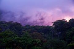 Sunset above rainforest, Sri Lanka Stock Images