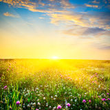 Sunset Above The Flowers