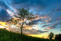 Sunset above the tree Royalty Free Stock Photo