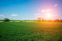 Sunset above wheat field Stock Image