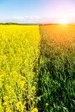 Sunset above young wheat and colza field Stock Photography