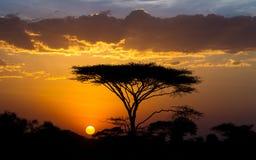 Sunset and Acacia tree in the Serengeti, Tanzania. Sunset and flat topped Acacia tree in the Serengeti, Tanzania Stock Image