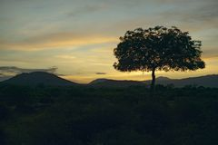 Sunset Acacia tree in Tsavo National park, Kenya, Africa Stock Photos