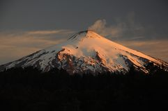 Sunset on the active volcano Villarica in Pucón, southern Chile. Araucaria araucana trees in front Snow covered volcano Patagonia. Sunset on the active stock photo