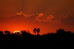 Sunset in Africa Royalty Free Stock Images