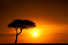 Sunset in Africa Stock Photography