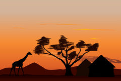 Sunset in Africa. Giraffe near small african village at sunset Royalty Free Stock Image