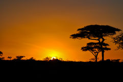 Sunset in africa. Sunset in the African savannah Royalty Free Stock Photography