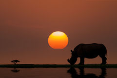 Sunset in Africa. Low Key of Image Rhinoceros on Sunset in Africa Royalty Free Stock Photography