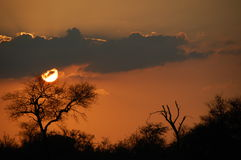 Sunset in Africa Royalty Free Stock Photos