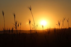 Sunset in Africa stock photos