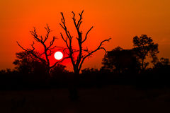 Sunset from Africa Royalty Free Stock Photo