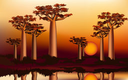 Sunset in the African baobab forest near the river 4 Royalty Free Stock Image