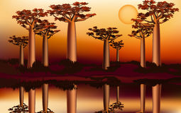 Sunset in the African baobab forest near the river 5 Royalty Free Stock Photography