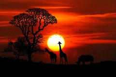 Sunset in African Safari Park