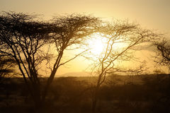 Sunset with African savanna trees Stock Photo