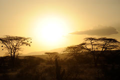 Sunset with African savanna trees Royalty Free Stock Image
