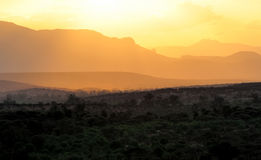 Sunset with African savanna trees Royalty Free Stock Images