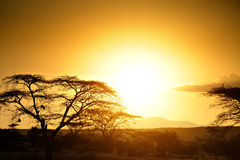 Sunset in the African savannah Stock Photo