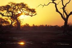Sunset in African savannah. Royalty Free Stock Photo