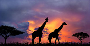Sunset in the African Savannah Royalty Free Stock Photography