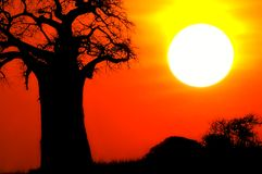 sunset afrykańskiej Obrazy Royalty Free